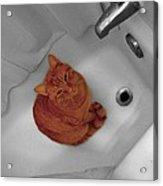 Bari The Cat Acrylic Print by Andrea Galiffi