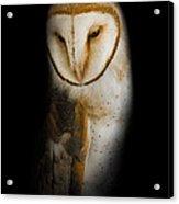 Barn Owl Acrylic Print by Bill Wakeley