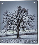 Barren Winter Scene With Tree Acrylic Print by Dan Friend