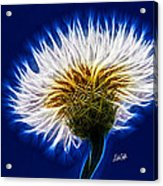 Basket Flower Inner Beauty Acrylic Print by Nikki Marie Smith