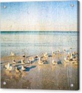 Beach Combers - Seagull Art By Sharon Cummings Acrylic Print by Sharon Cummings