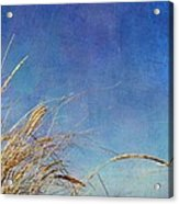 Beach Grass In The Wind Acrylic Print by Michelle Calkins
