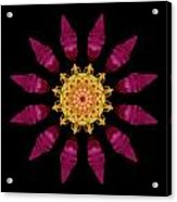 Beach Rose Iv Flower Mandala Acrylic Print by David J Bookbinder