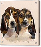 Beagle Babies Acrylic Print by Suzanne Schaefer