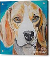 Beagle Acrylic Print by PainterArtist FIN
