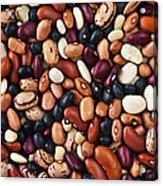 Beans Acrylic Print by Elena Elisseeva