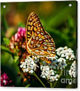 Beautiful Butterfly Acrylic Print by Robert Bales