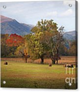 Beautiful Cades Cove Acrylic Print by Lena Auxier