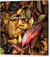 Beautiful Fall Color Acrylic Print by Meirion Matthias