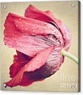 Beautiful Flower Acrylic Print by Diana Kraleva