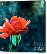 Beautiful Red Rose Acrylic Print by Robert Bales
