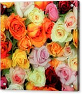 Bed Of Roses Acrylic Print by Tony Grider