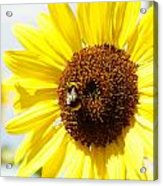 Bee Acrylic Print by Les Cunliffe