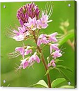 Beeweed . . .with Ant Acrylic Print by  Feva  Fotos