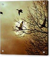 Before A Winter Sky Acrylic Print by Bob Orsillo