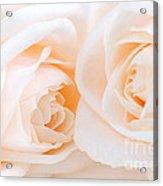 Beige Roses Acrylic Print by Elena Elisseeva