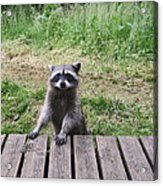 Belly Up To The Bar Acrylic Print by Kym Backland