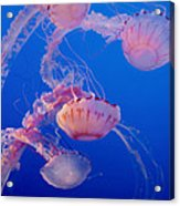 Below The Surface 3 Acrylic Print by Jack Zulli