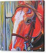Big Red Acrylic Print by Jenn Cunningham