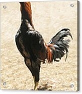 Big Rooster Acrylic Print by Lonnie C Tapia