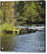 Big Trout Waiting Acrylic Print by Mark Messenger