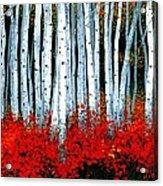 Birch 24 X 48  Acrylic Print by Michael Swanson