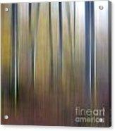 Birch Trees. Abstract. Blurred Acrylic Print by Bernard Jaubert