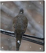 Bird In Snow - Animal - 01135 Acrylic Print by DC Photographer