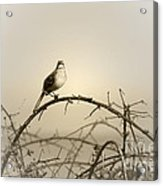 Bird In The Briar Acrylic Print by Artist and Photographer Laura Wrede