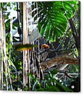 Bird - National Aquarium In Baltimore Md - 12121 Acrylic Print by DC Photographer