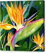 Bird-of-paradise Acrylic Print by Janis Grau
