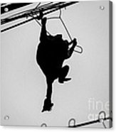 Bird On A Wire Acrylic Print by Dean Harte