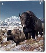 Bison Herd In Winter Acrylic Print by Daniel Eskridge