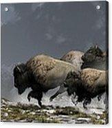 Bison Stampede Acrylic Print by Daniel Eskridge