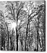 Black And White Forest Acrylic Print by Dawdy Imagery