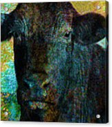 Black Angus Acrylic Print by Ann Powell