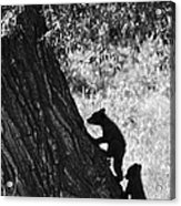 Black Bear Cubs Climbing A Tree Acrylic Print by Crystal Wightman