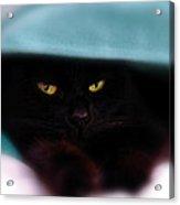 Black Cat Secrets Acrylic Print by Bob Orsillo