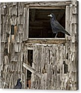 Black Crows At The Old Barn Acrylic Print by Edward Fielding