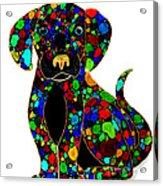 Black Dog 2 Acrylic Print by Nick Gustafson