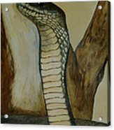 Black Mamba Acrylic Print by Tracey Beer