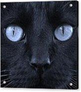 Blackie Blue Acrylic Print by Elizabeth Sullivan