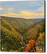 Blackwater Gorge With Fall Leaves Acrylic Print by Dan Friend