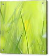 Blades Of Grass - Green Spring Meadow - Abstract Soft Blurred Acrylic Print by Matthias Hauser