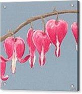 Bleeding Hearts Acrylic Print by Anastasiya Malakhova