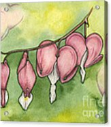 Bleeding Hearts Acrylic Print by Nora Blansett