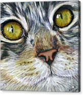 Stunning Cat Painting Acrylic Print by Michelle Wrighton