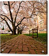 Blooming Giants Acrylic Print by Dan Mihai