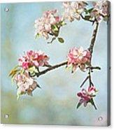 Blossom Branch Acrylic Print by Kim Hojnacki