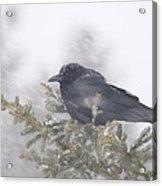 Blowin' In The Wind - Crow Acrylic Print by Sandra Updyke